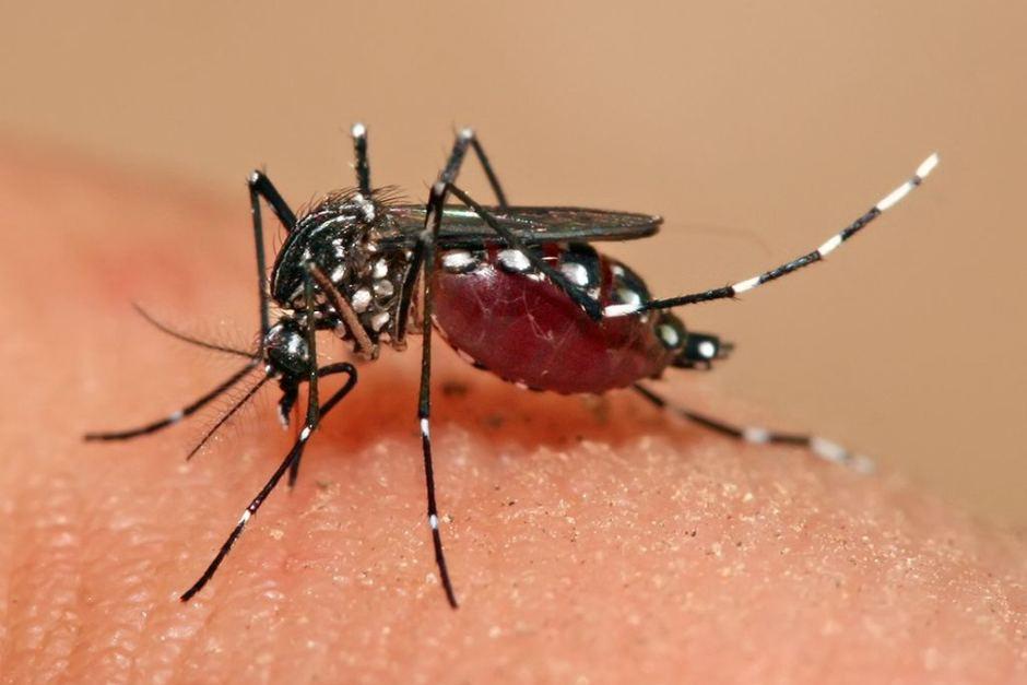 الملاريا و اعراضها