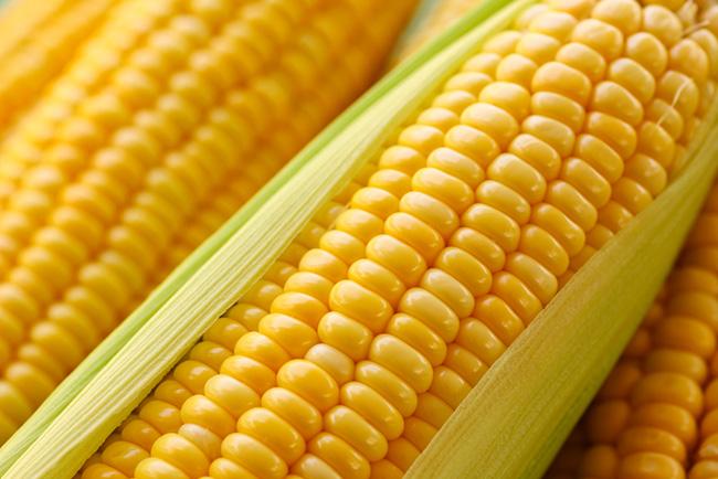 فوائد الذرة للحامل