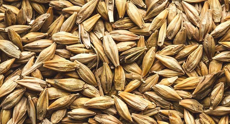 ما هي فوائد الشعير للبشرة