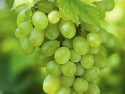 13 فائدة من فوائد العنب الاخضر