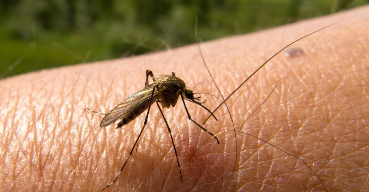 علاج الملاريا