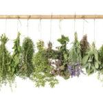 علاج الاعصاب بالاعشاب