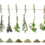 الطب البديل العربي وماذا يستخدم من اعشاب