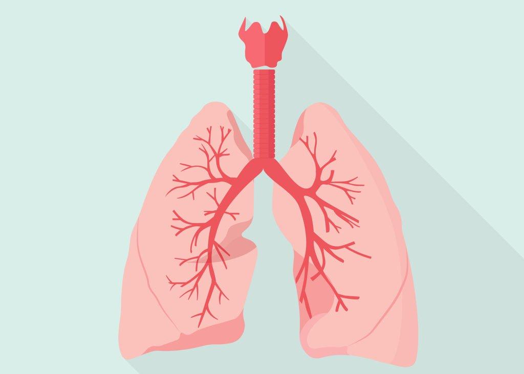 علاج التهابات الصدرية بالاعشاب