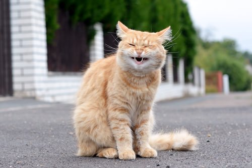 حساسية القطط