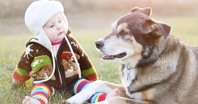 حيوانات للاطفال